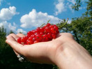 ** Organic Gardening ** A Beginners Guide